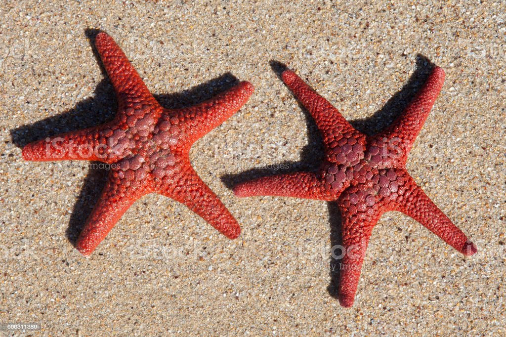 Star fishes stock photo