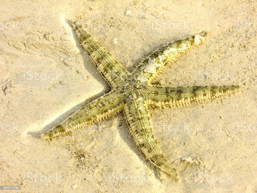 Star of the Malapascua Beach stock photo