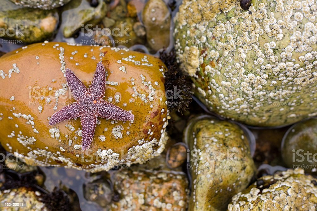 Star on the rocks royalty-free stock photo