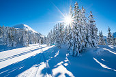 ski track in fresh deep snow in alpine terrain with snow covered conifer trees in winter mountains on sunny cold day starshapped sun peaceful nobody