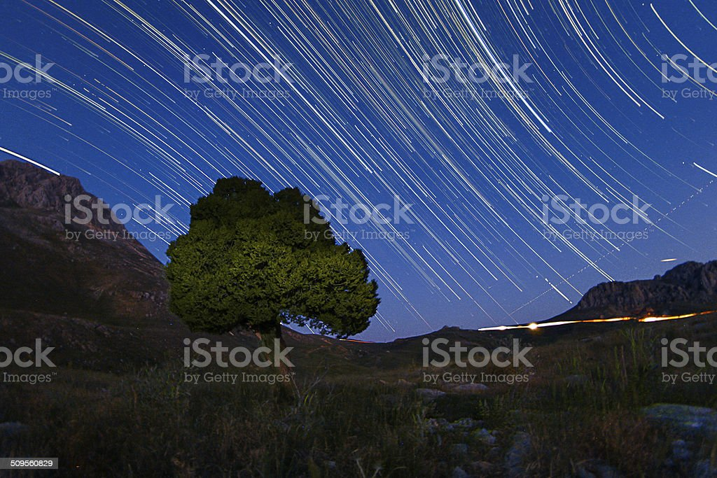Star trails and the juniper tree stock photo