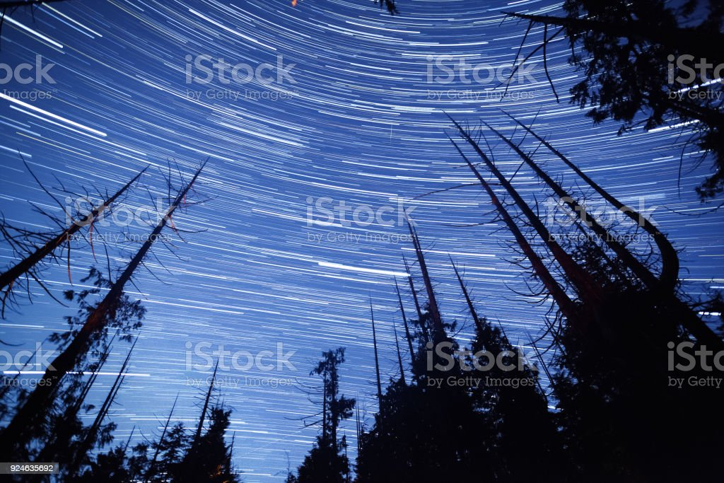 Star Trails in the Forest stock photo