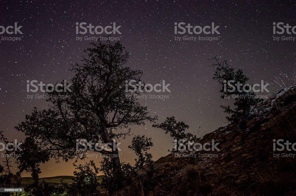 star trails - Photo