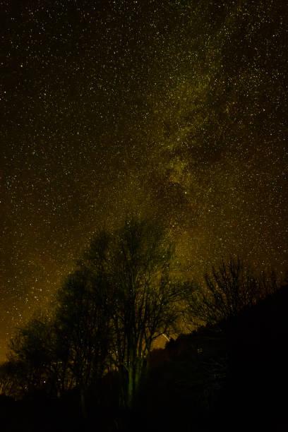 Sterne Blick durch einen Baum in einer klaren Nacht – Foto