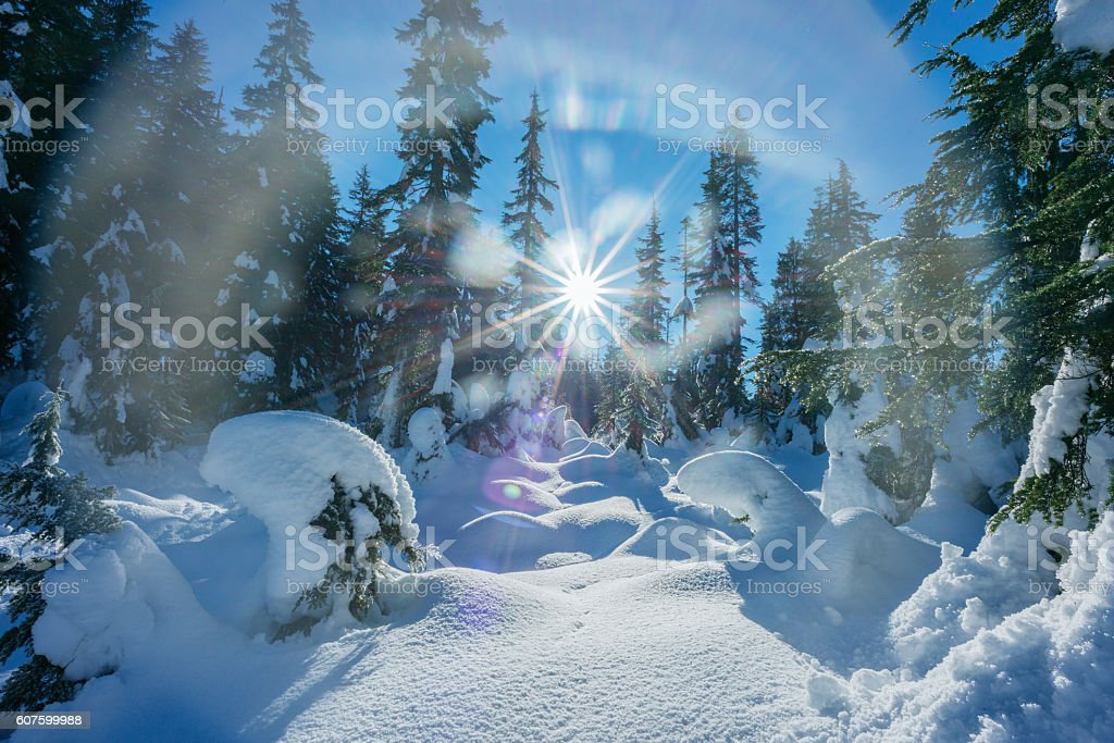 Starburst of Sun on Winter Forest Covered in Fresh Snow stock photo