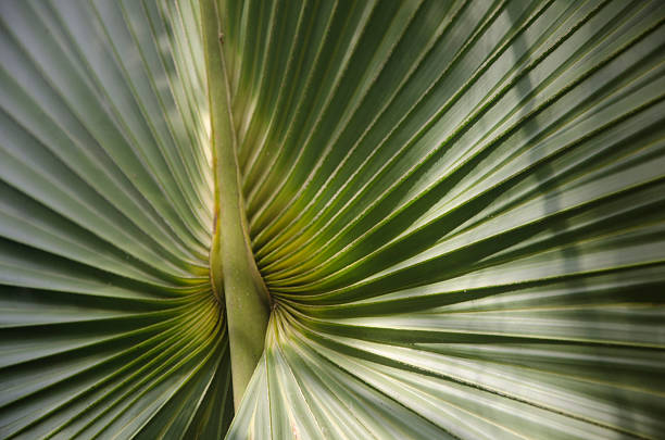 Starburst Palm Pattern stock photo