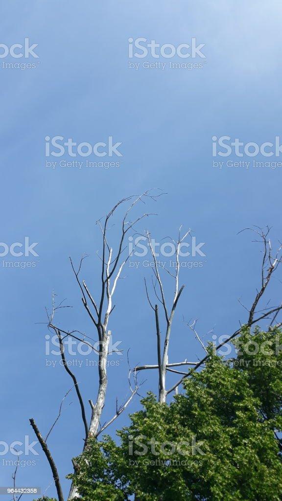 A velha árvore - Foto de stock de Céu - Fenômeno natural royalty-free