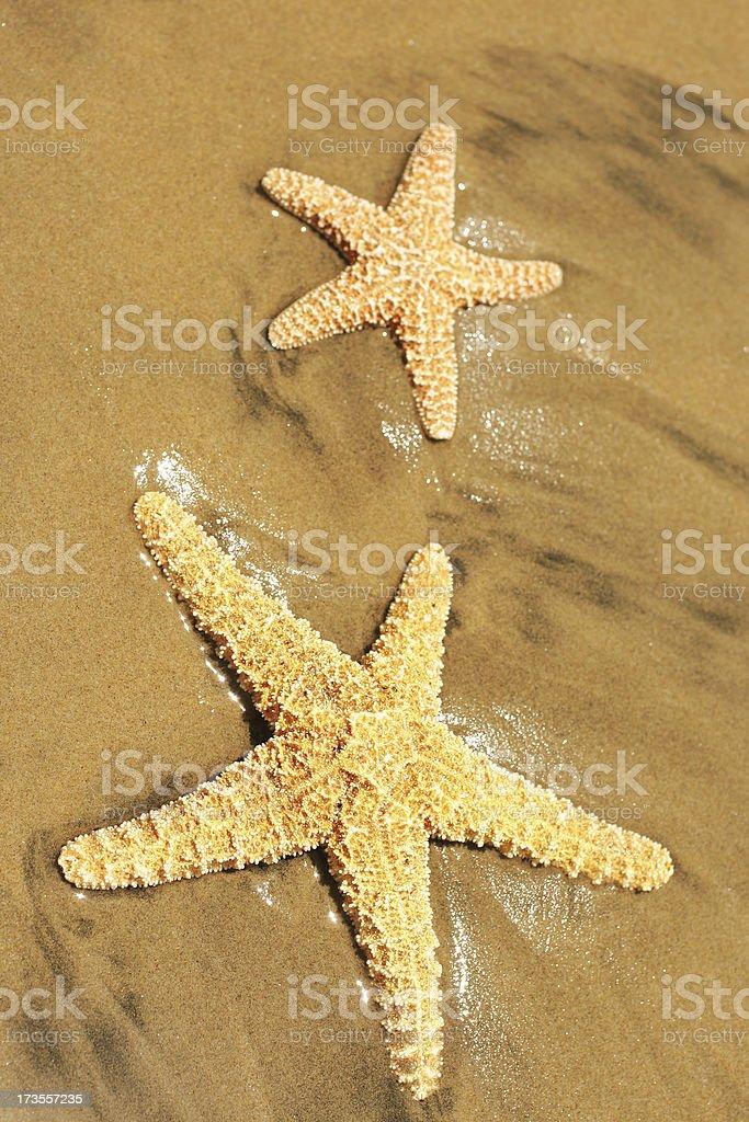 Starfish 2 royalty-free stock photo
