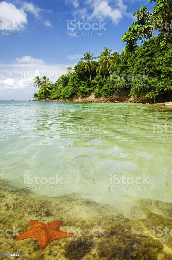 Starfish and Clear Water stock photo