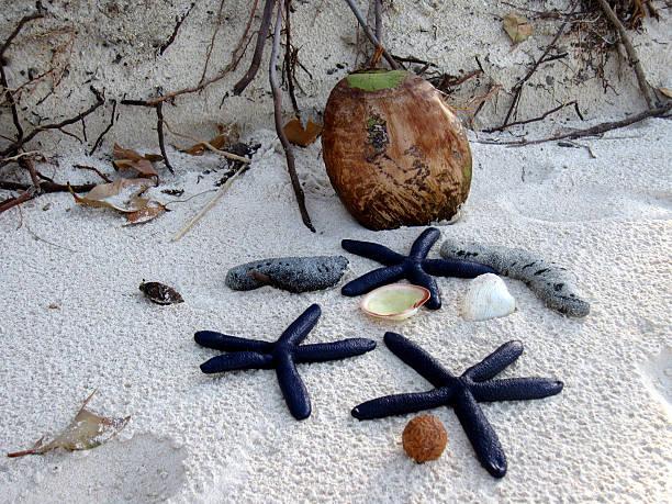 stelle marine e composizione di cocco - immerse in the stars foto e immagini stock