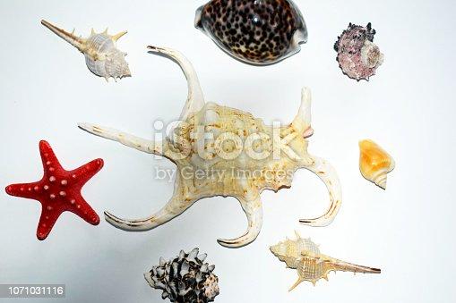 istock Starfish and colorful seashells on white background. Colorful colorful colorful fish. Sea background. 1071031116