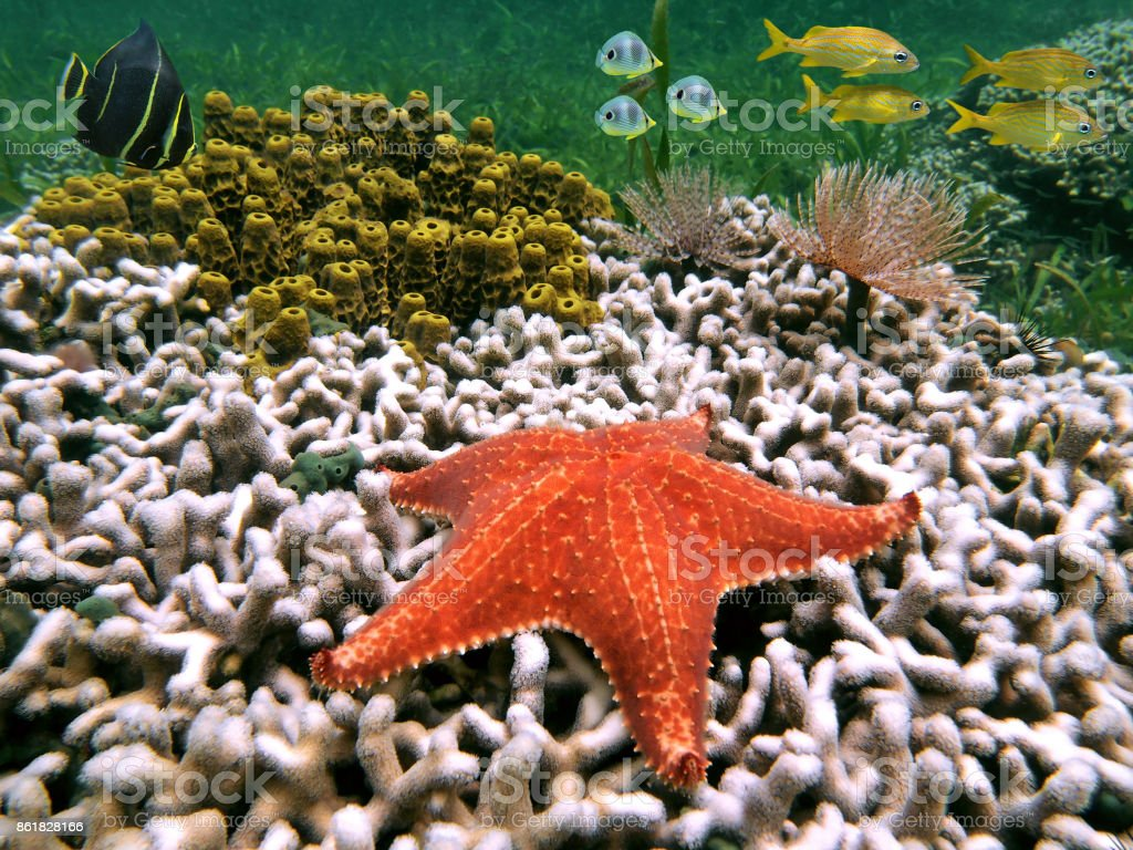 Starfish And Fish Stock Photo & More Pictures of Animal | iStock