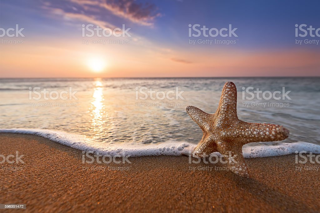 starfish and golden sands royalty-free stock photo