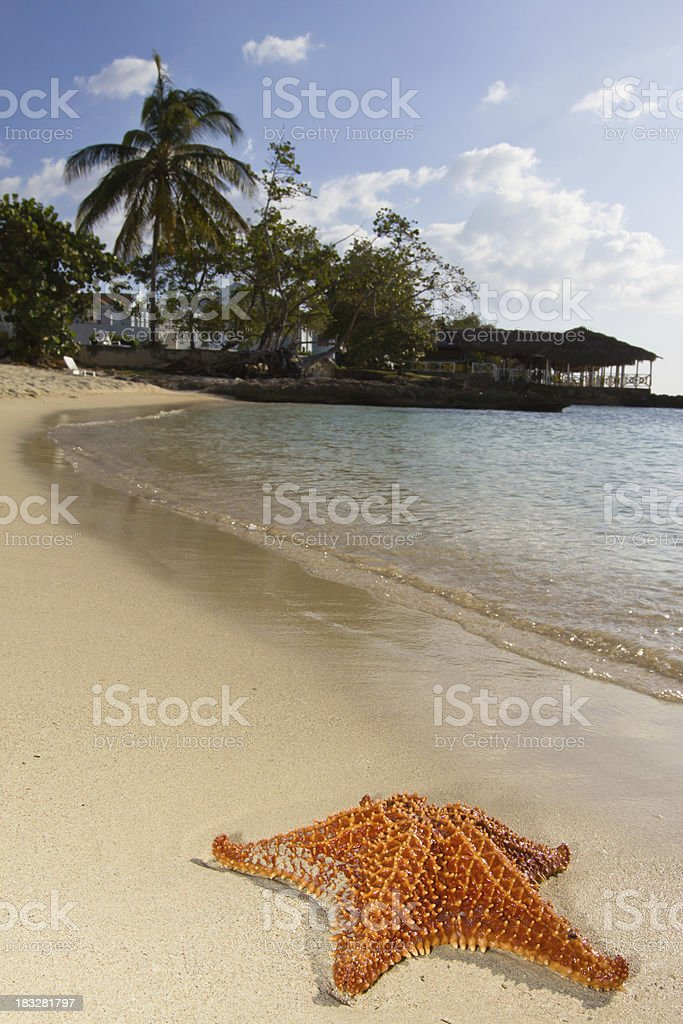 Starfish and Sea royalty-free stock photo
