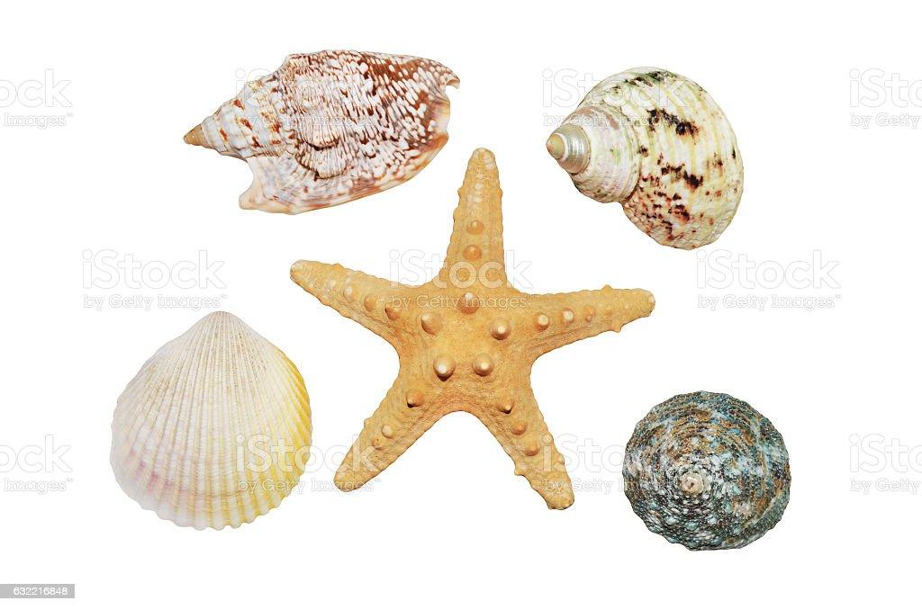 Starfish and seashells closeup ストックフォト