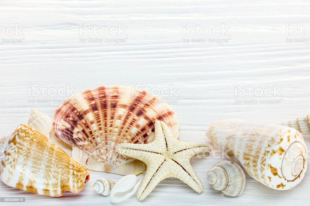 starfish and seashells of different size on white wooden background stock photo