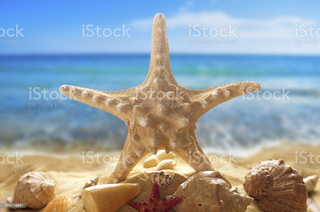 Seesterne und Muscheln am Strand – Foto