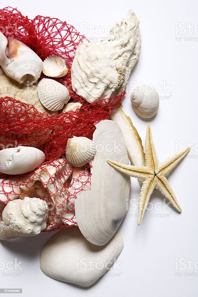 starfish and shells 2 royalty-free stock photo
