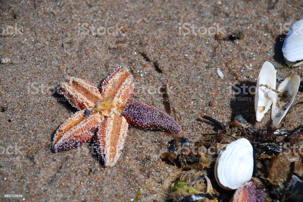 Starfish and shells at sea beach royalty-free stock photo