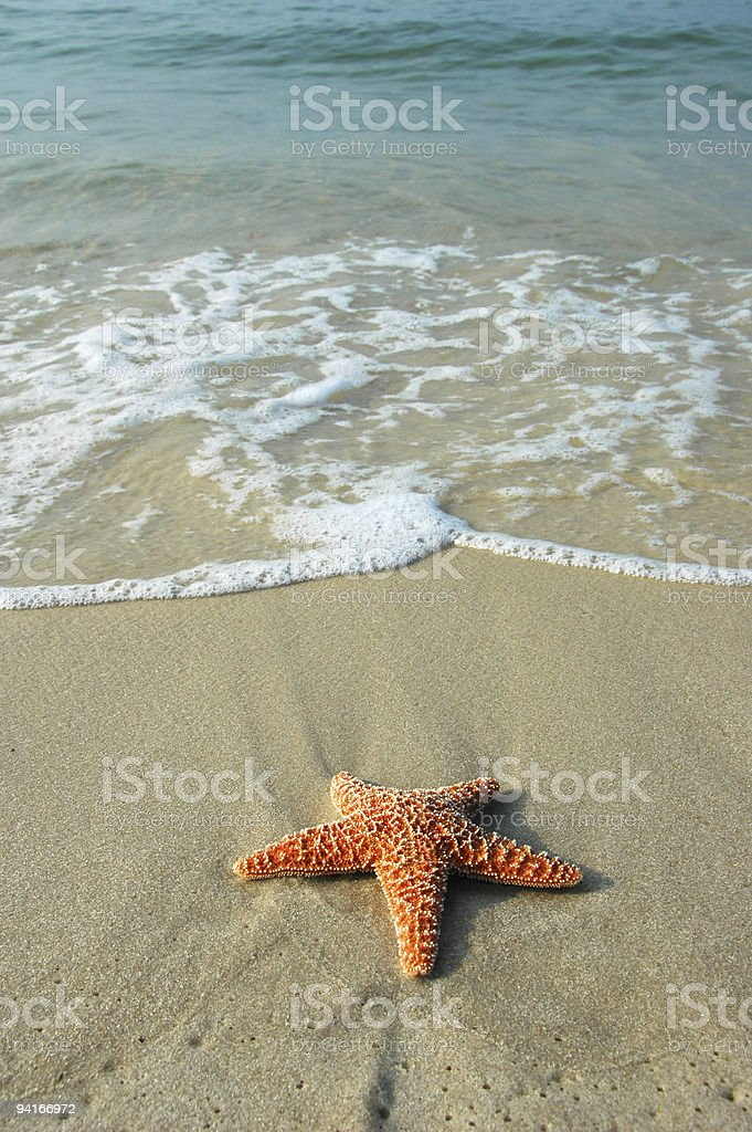 Starfish and the Ocean stock photo