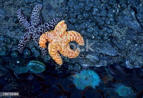 istock Starfish and tide pool 139703494