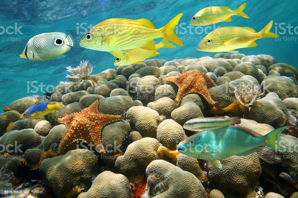 Starfish and tropical fish in a coral reef – zdjęcie