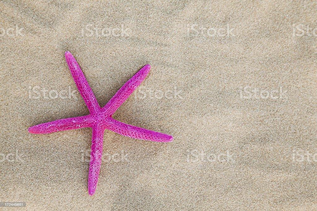 Starfish background royalty-free stock photo