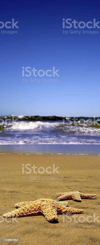 starfish beach royalty-free stock photo
