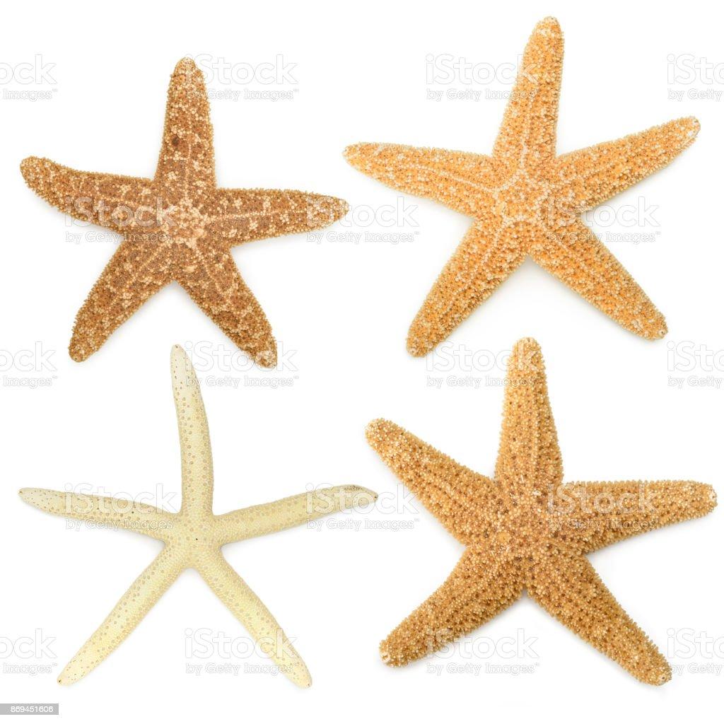 Starfish Collection stock photo