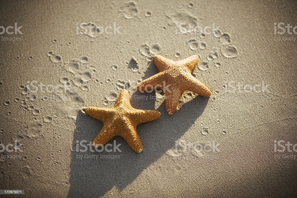 Starfish couple royalty-free stock photo