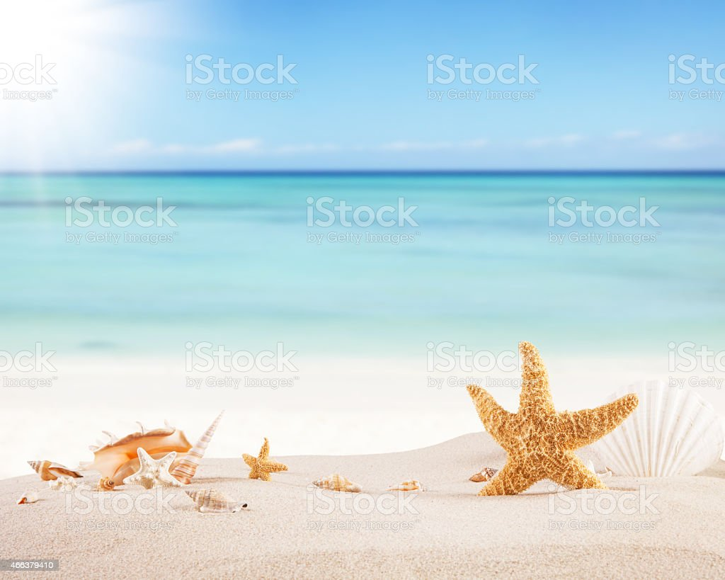 Starfish Crab And Shells On A Sandy Ocean Beach stock photo iStock