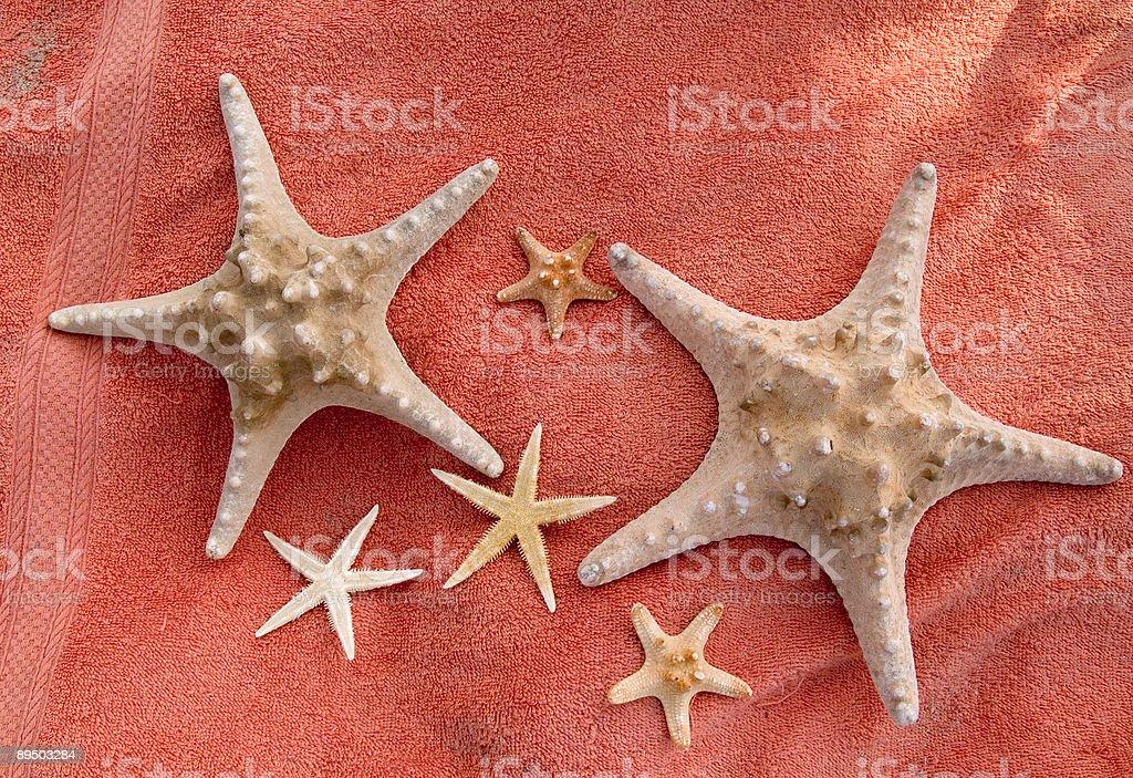 Étoile de mer en famille photo libre de droits