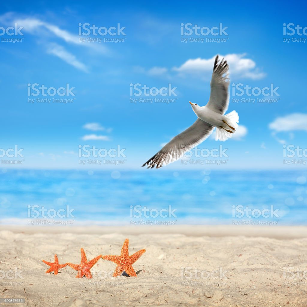 starfish family vacation on beach foto de stock royalty-free