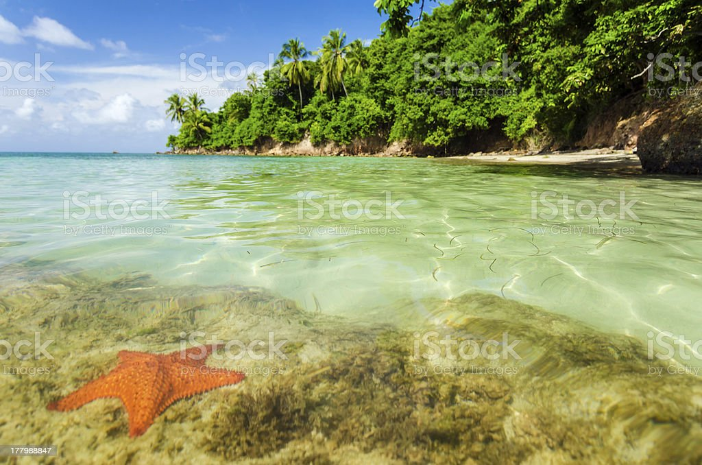 Starfish in Clear Water stock photo