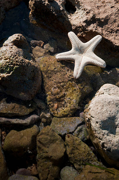 starfish in rock pool on rocky Mediterranean shore stock photo