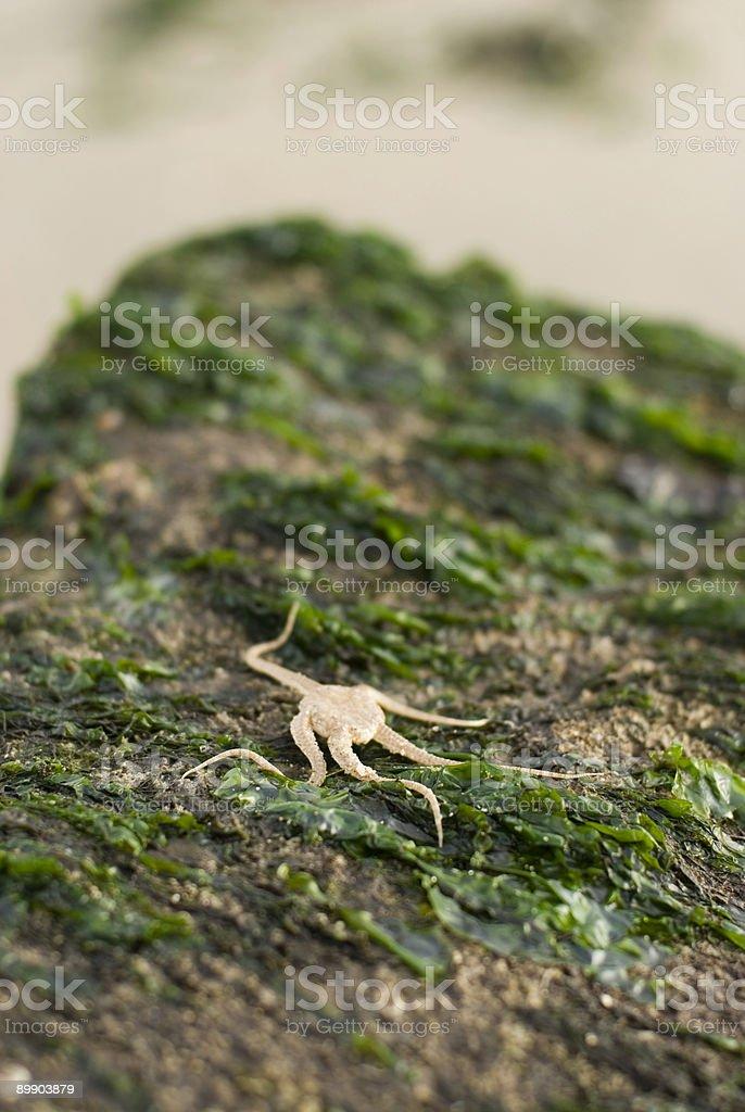 Starfish in sea landschape stock photo