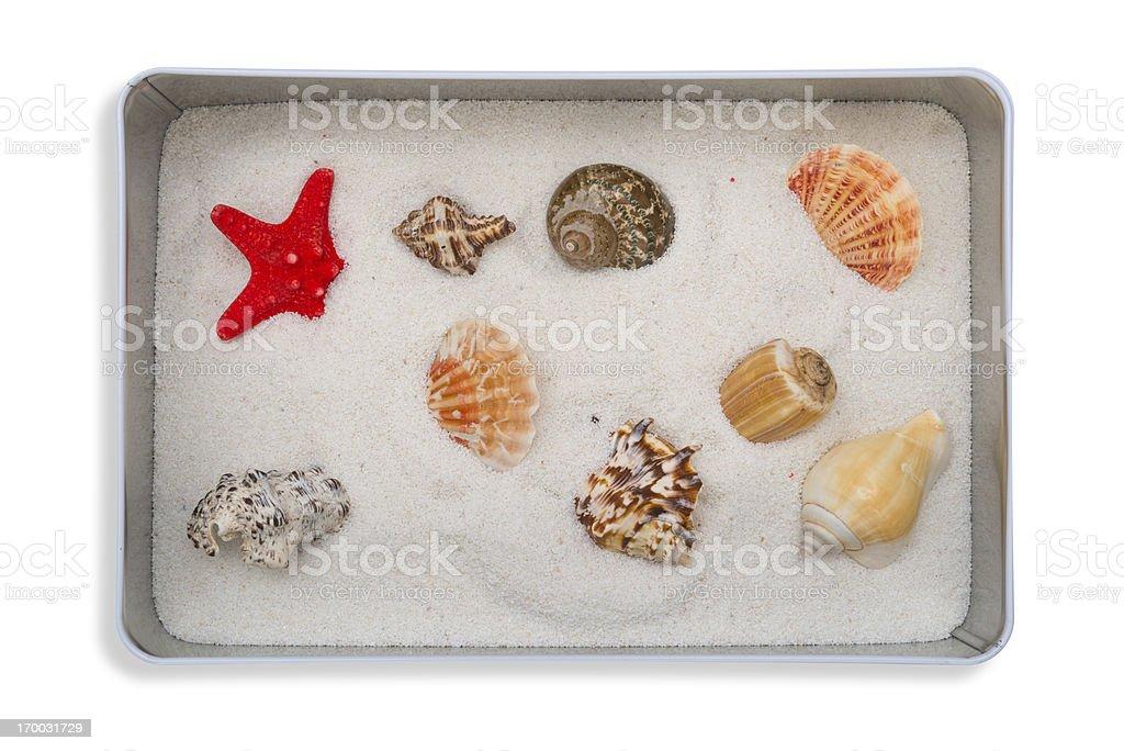 Starfish in the metal box royalty-free stock photo