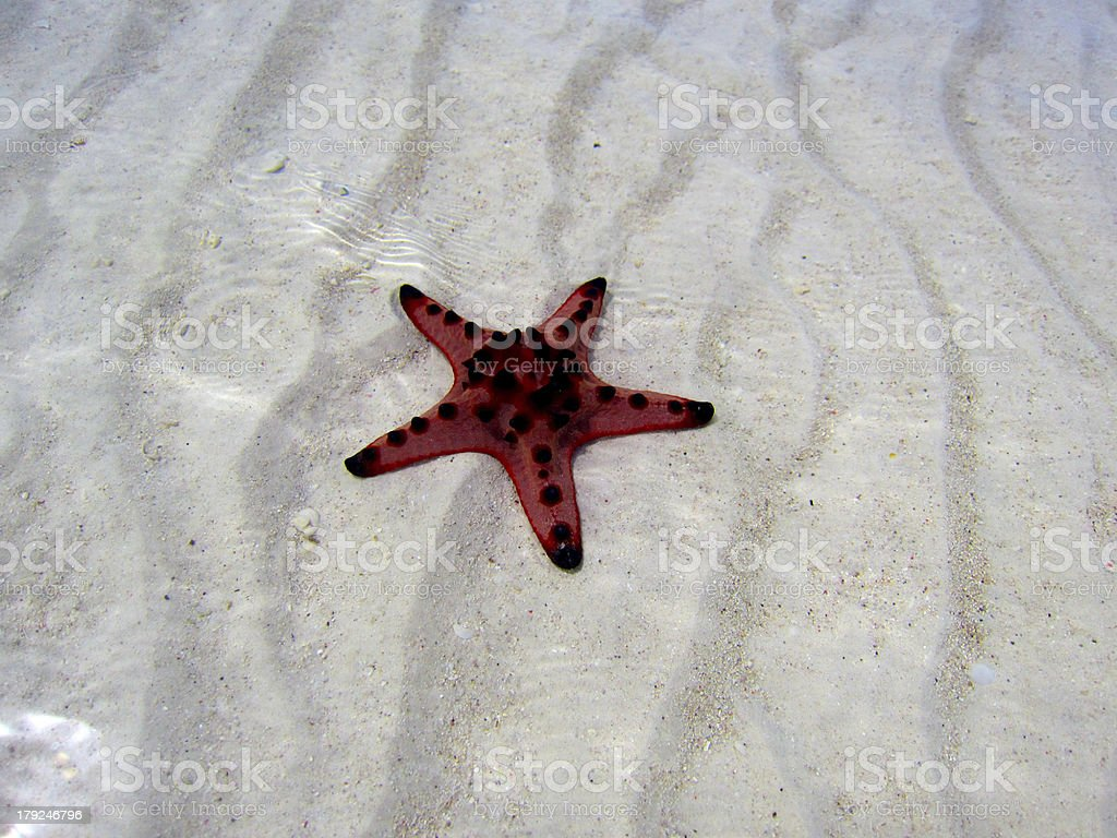 Starfish in the Sea royalty-free stock photo