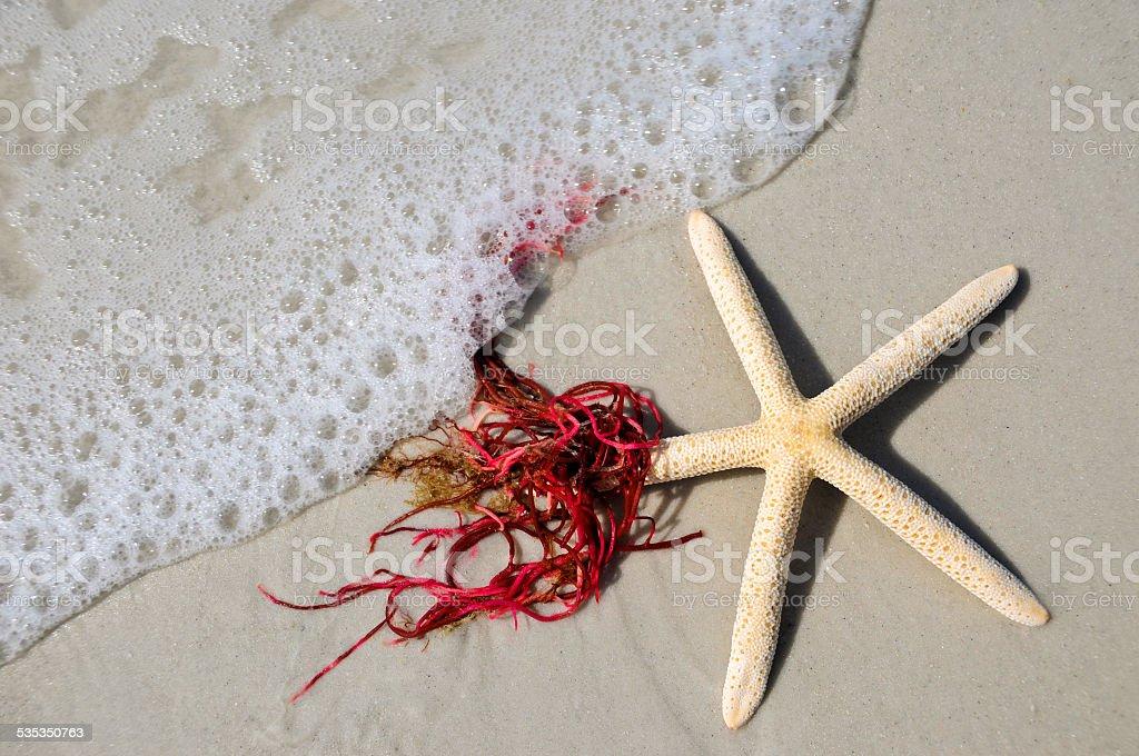 Estrella de mar en la Sala Surf - foto de stock