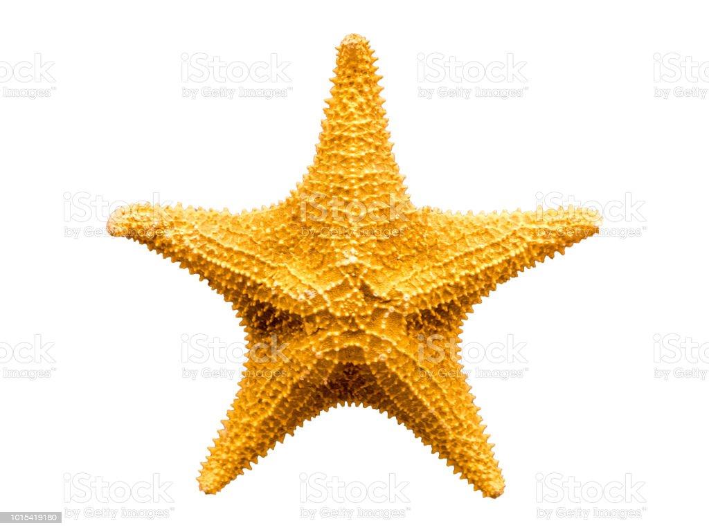 Starfish isolated on white background stock photo