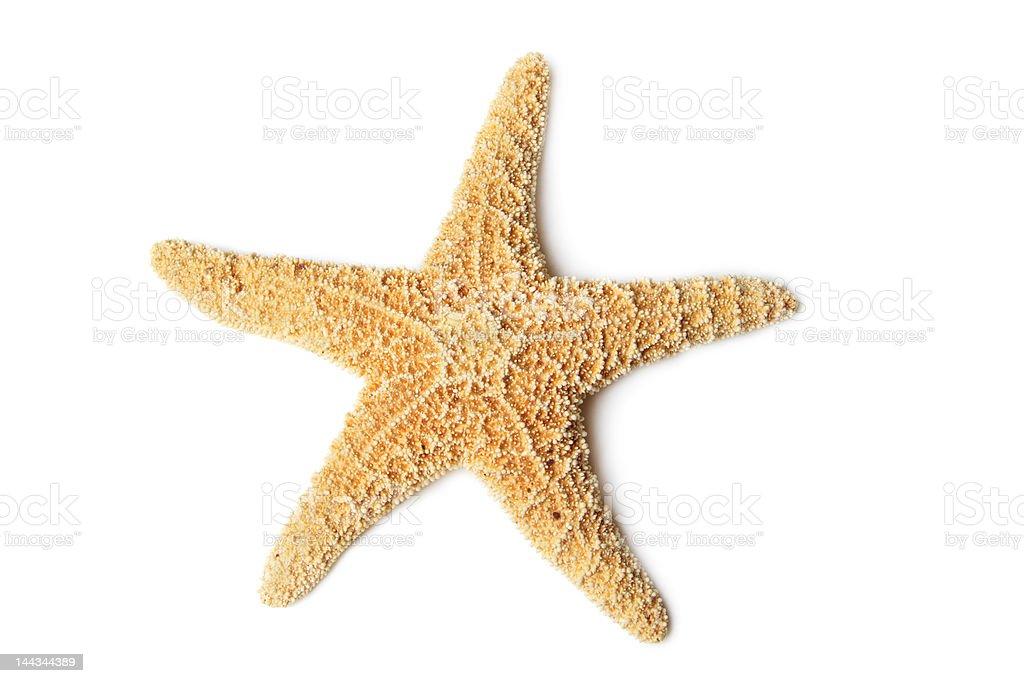 Starfish, isolated on white stock photo