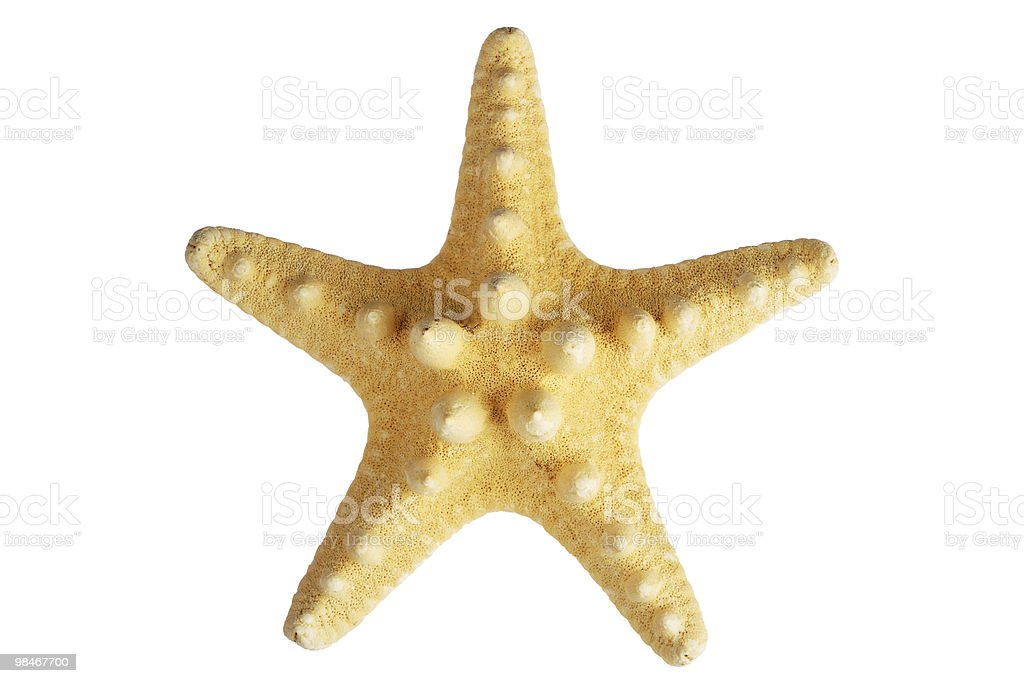 Starfish isolated royalty-free stock photo