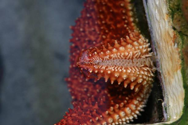 starfish moving stock photo