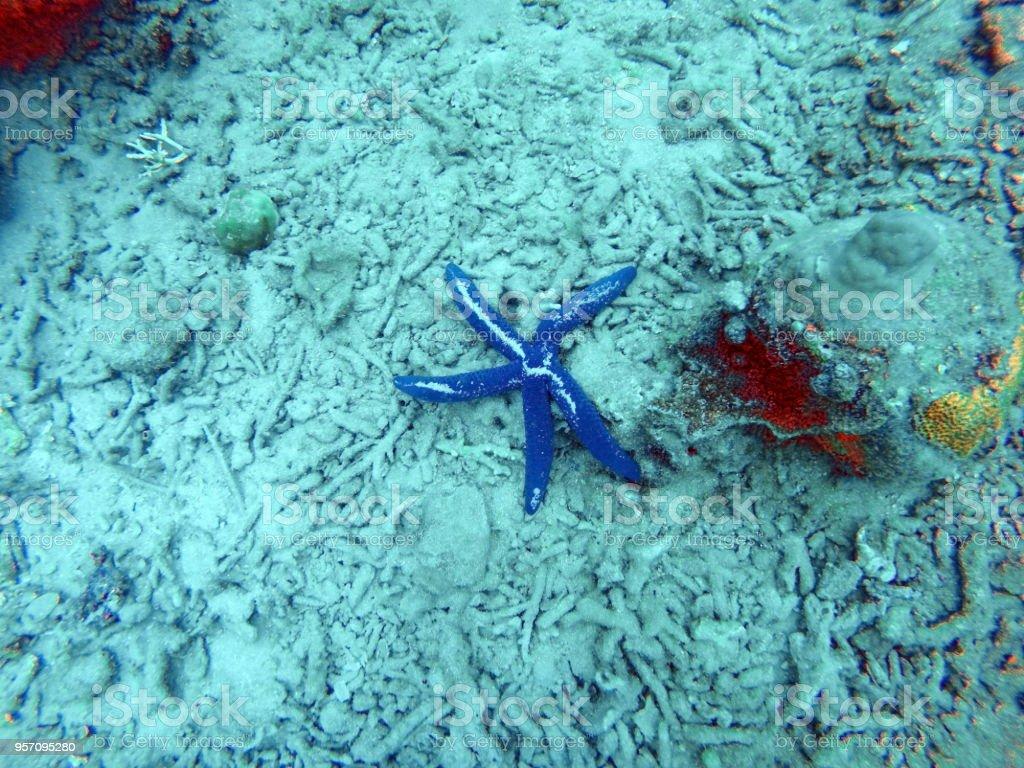 Starfish off the coast of Nha Trang stock photo