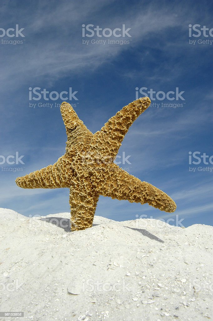Starfish on a Beach royalty-free stock photo