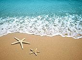 ヒトデ、ビーチの砂
