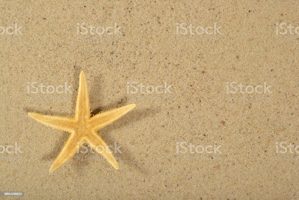 Starfish on a sand background zbiór zdjęć royalty-free