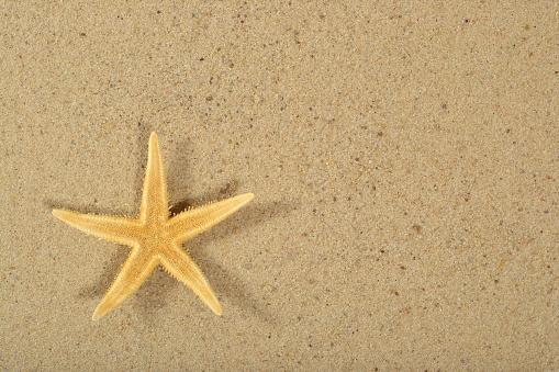 Foto de Estrela Do Mar Na Areia Fundo e mais fotos de stock de Amarelo