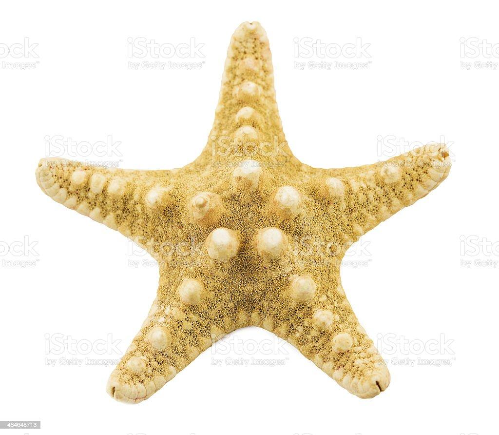 starfish  on a white background stock photo