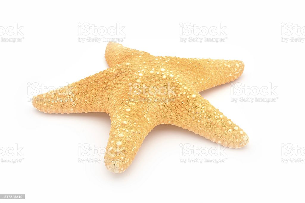 Starfish on a white background. stock photo